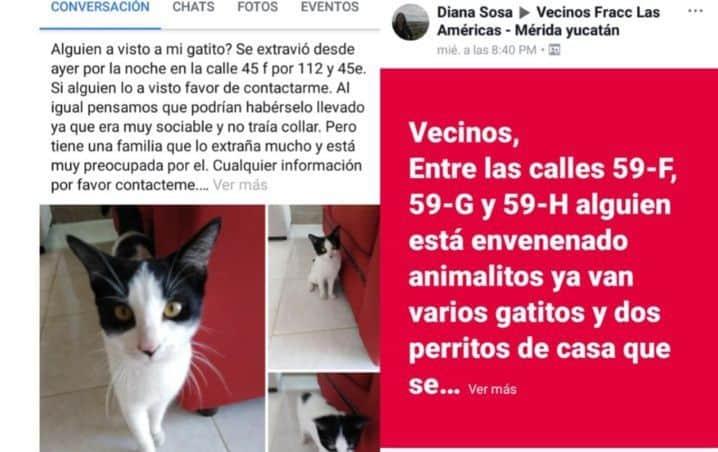 Denuncian a personas que envenenan mascotas en Yucatán