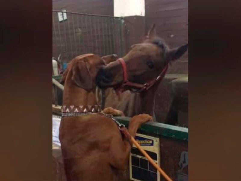 Vídeo: ¡Qué tierno! Muestran su cariño un perro y un caballo