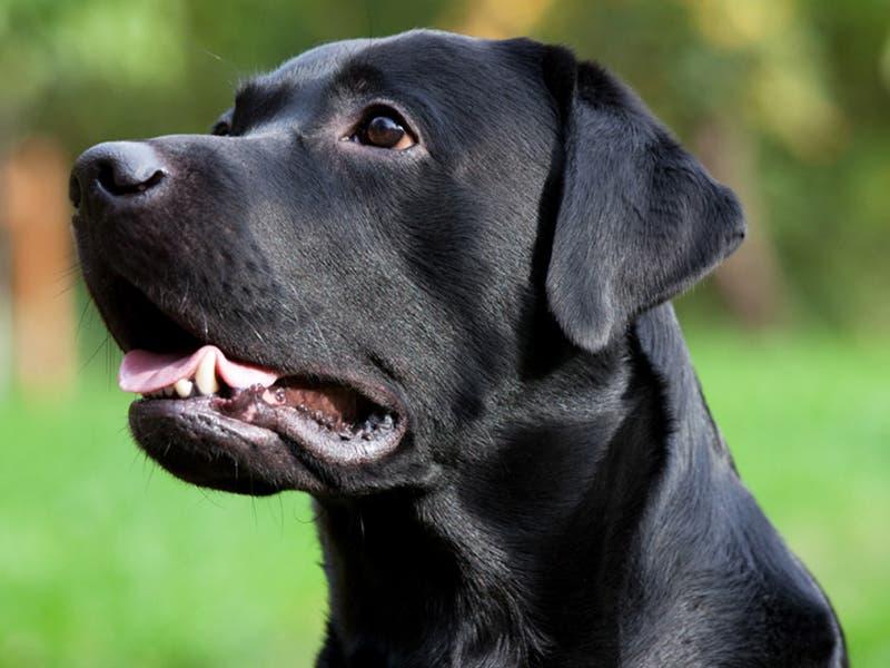 Un perro defendió a su dueña de la golpiza de su marido