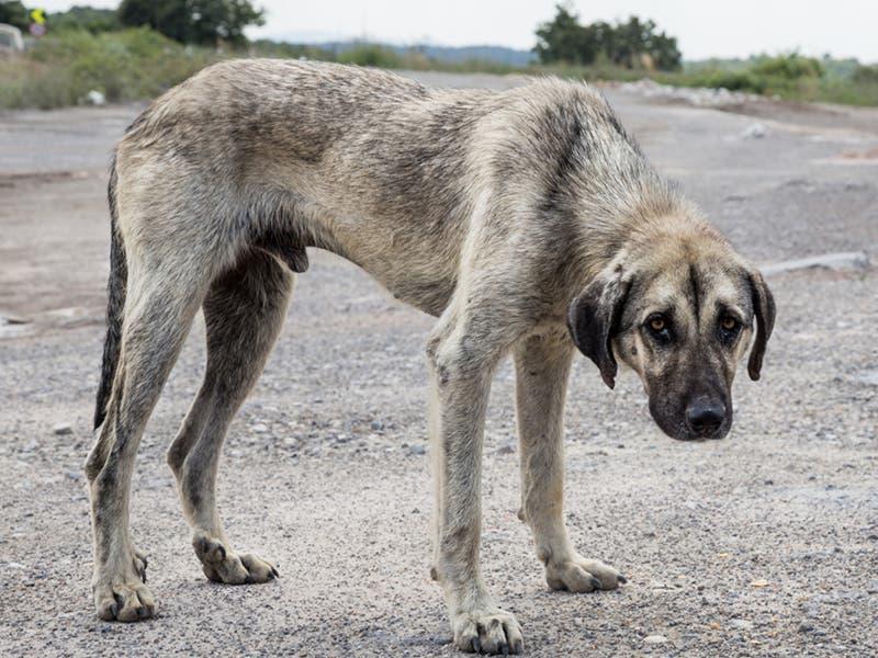 El maltrato animal podría ser un delito