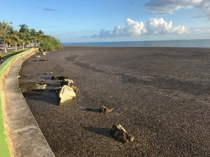Descartan contaminantes en la Bahía de Chetumal