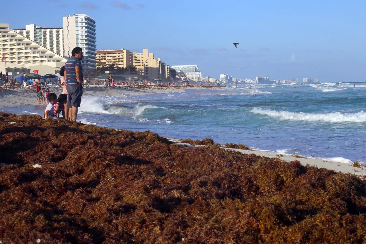 Pronostican arribo masivo de sargazo a Quintana Roo