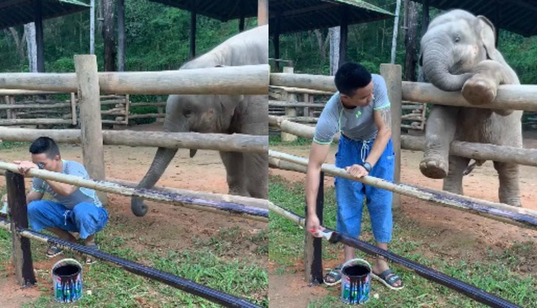 Vídeo: Conmovedor momento entre un cuidador y un elefante