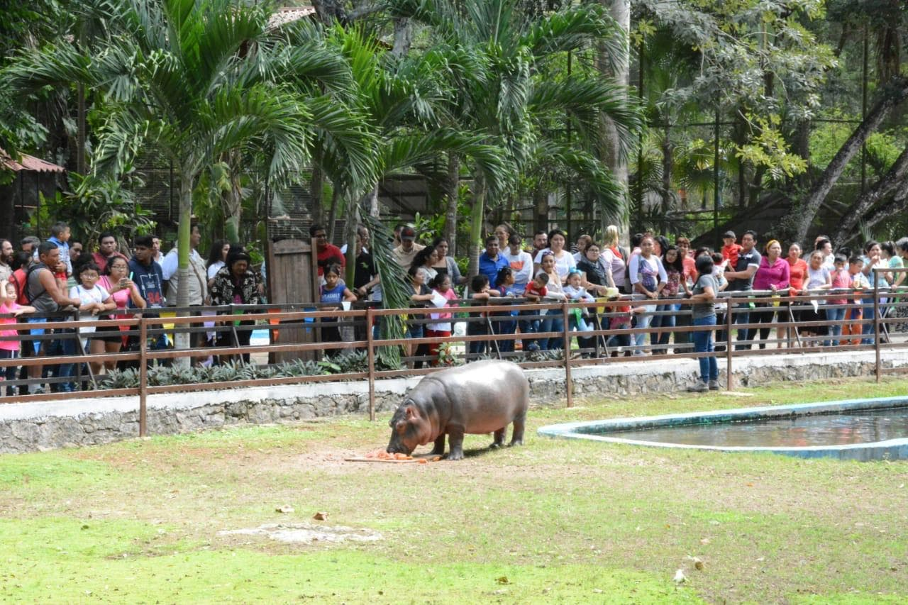 Zoológico de Chetumal contará con nuevas especies de animales