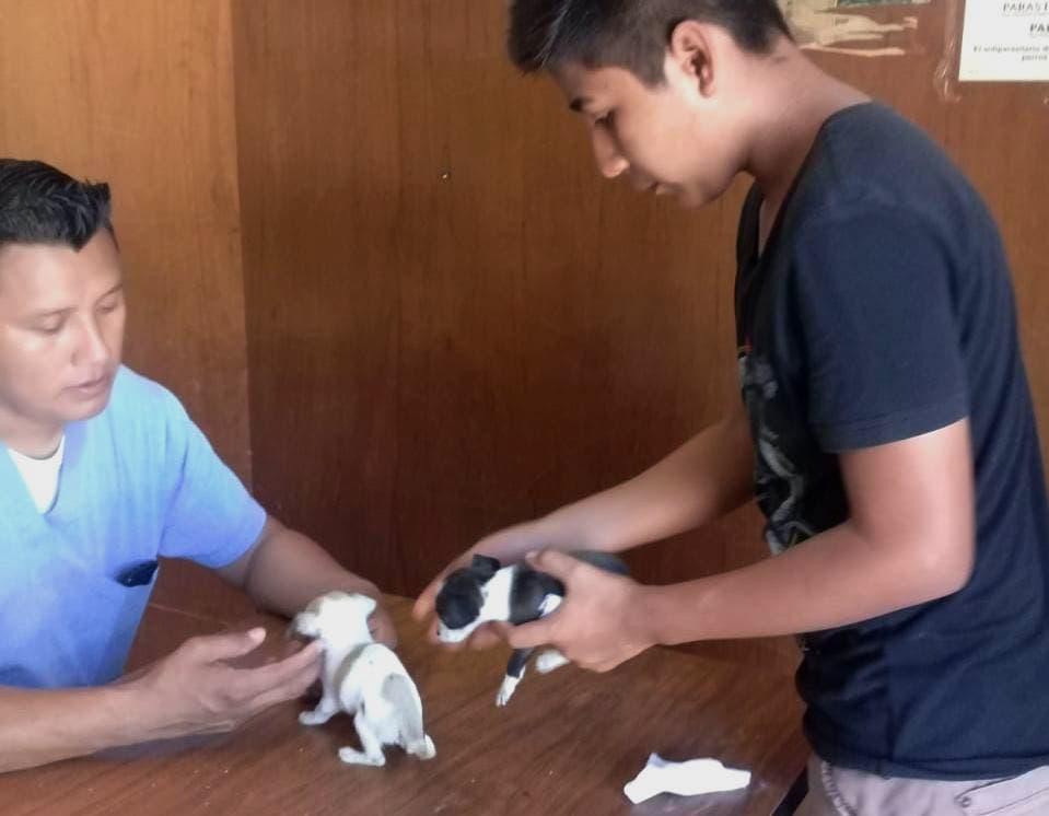 Control Animal Municipal de Felipe Carrillo Puerto,promueven el cuidado y protección de mascotas.
