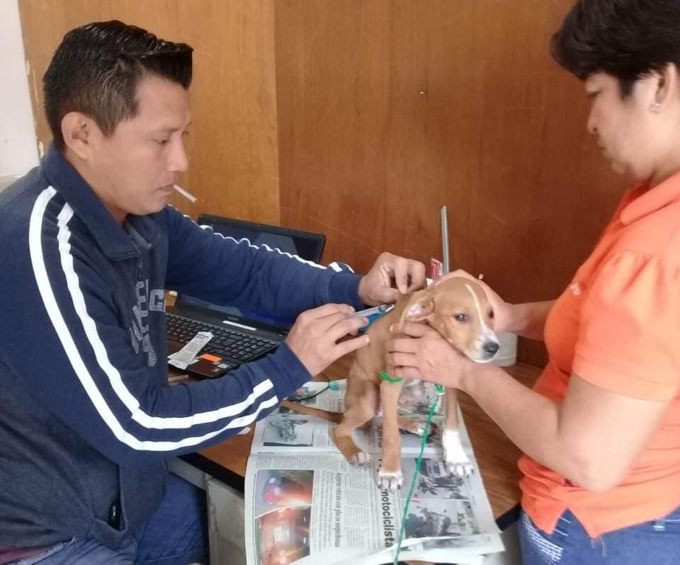 Felipe Carrillo Puerto promueve el cuidado de mascotas