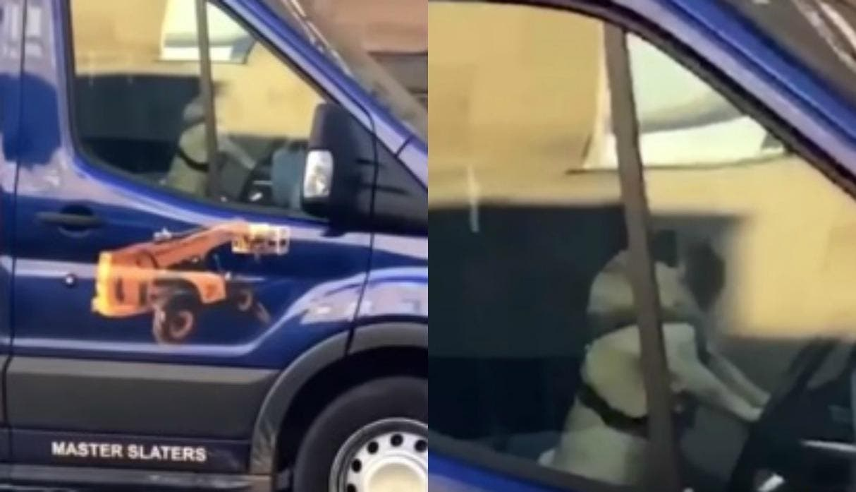 Vídeo: Perro toca el claxon de la camioneta para llamar la atención de su dueño
