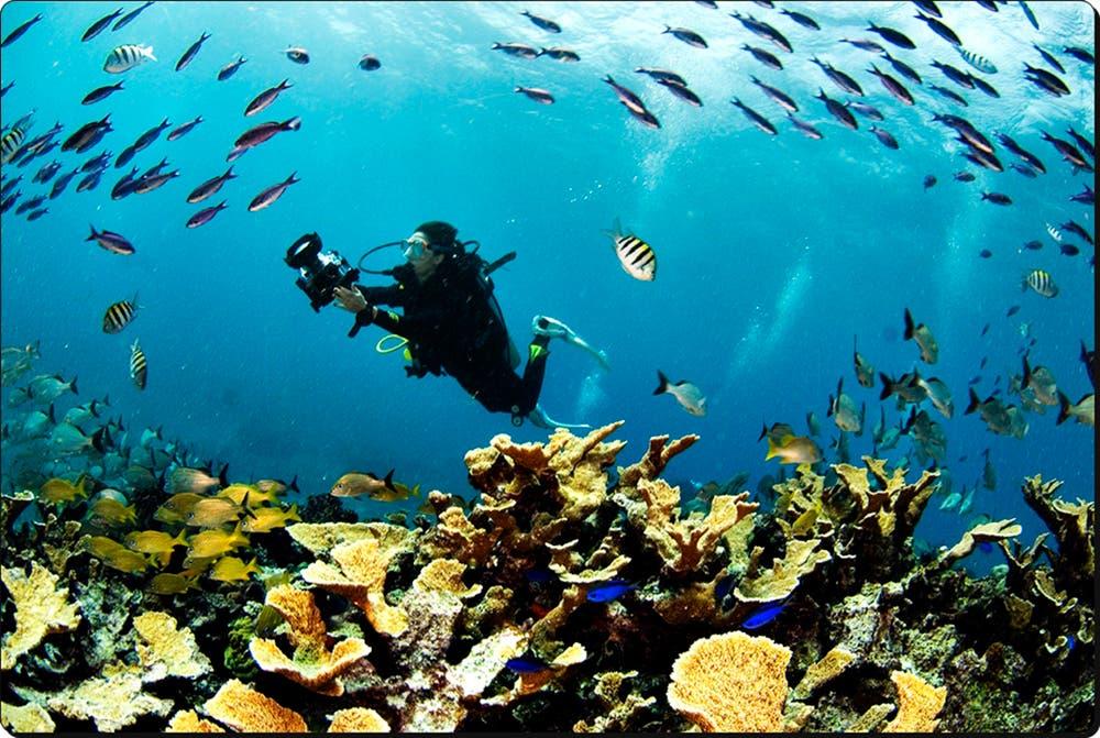 Quintana Roo, elegido entre los mejores destinos de buceo en el mundo.