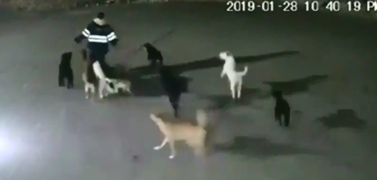 Video: Jauría de perros asesina a una mujer