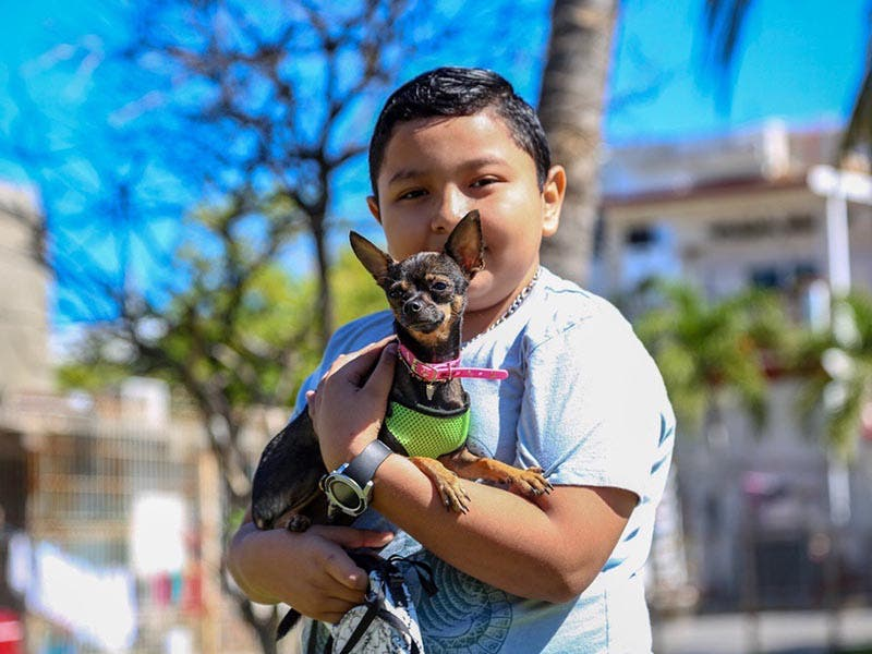 Responsabilidad con mascotas