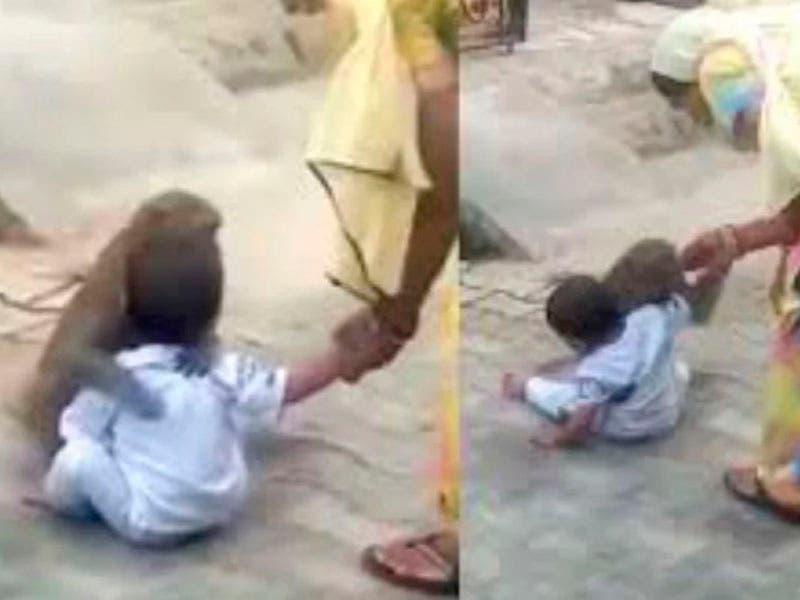 Vídeo: Mono sorprende al sacar a un niño de su casa y luego juega con él