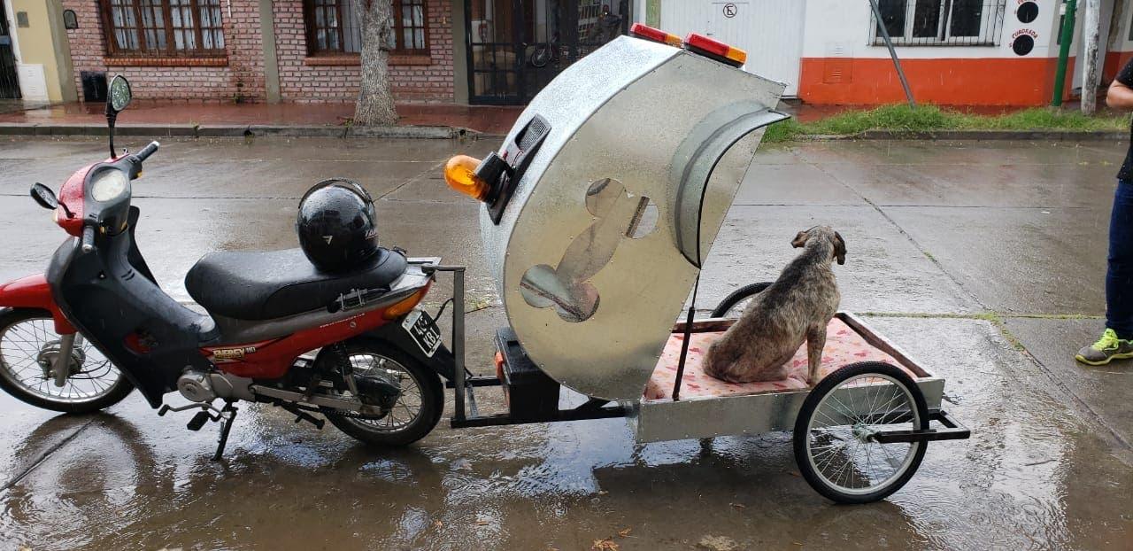 Trasladan al primer paciente en ambulancia para mascotas