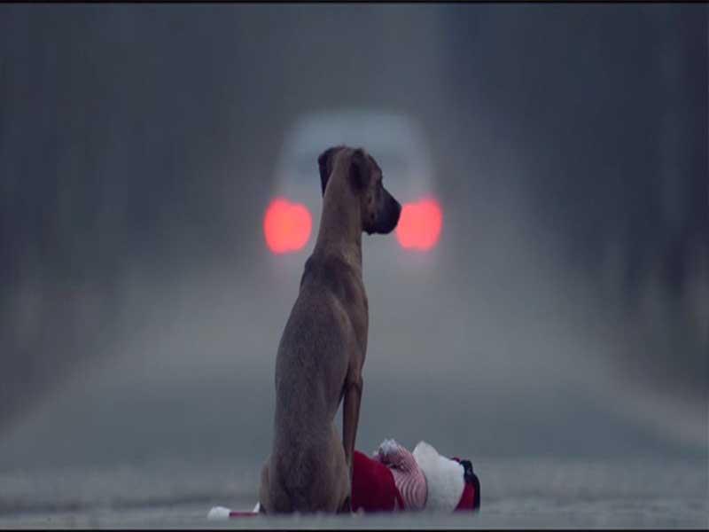 Vídeo: Perro le pide a barrendero que lo acaricie y enternece las redes sociales