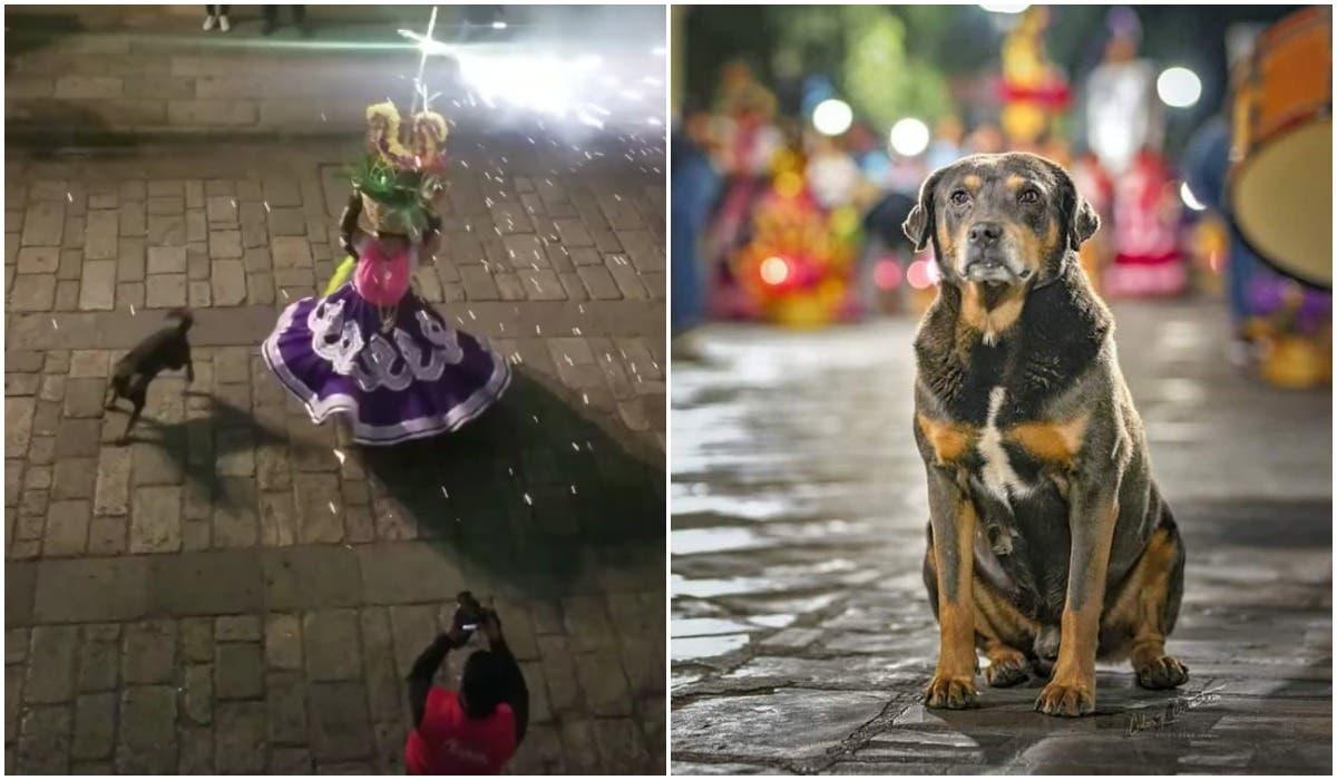 Vídeo: Perro Mazapán baila y aguanta los cuetes en Calenda, Oaxaca
