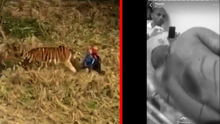 Vídeo: Sujeto muere al ser atacado por un tigre al saltar la cerca del zoológico