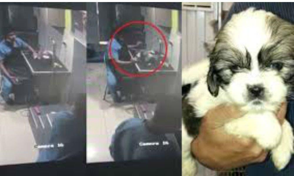 Vídeo: ¡Qué poca! Veterinario golpea a perro y lo deja inconsciente