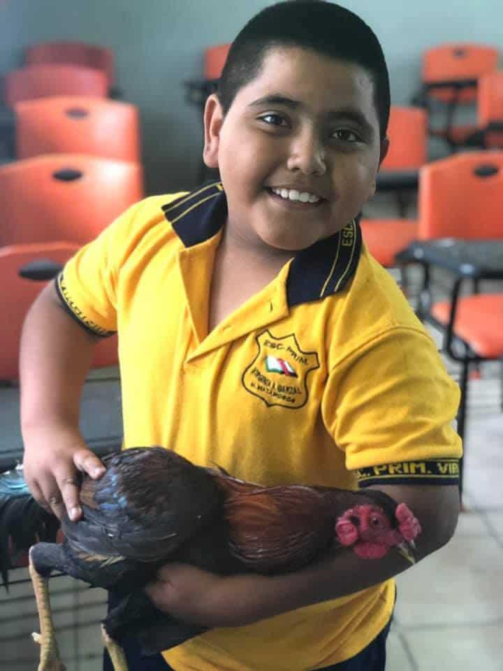 Niño regala gallo a maestra