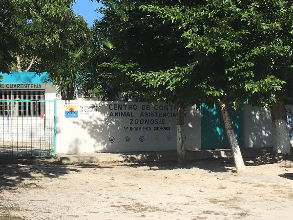 Los elementos policíacos de Cozumel, llevaron al perro lesionado al Centro de Control Animal
