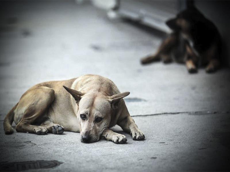 Buscan al asesino de perros en Valladolid
