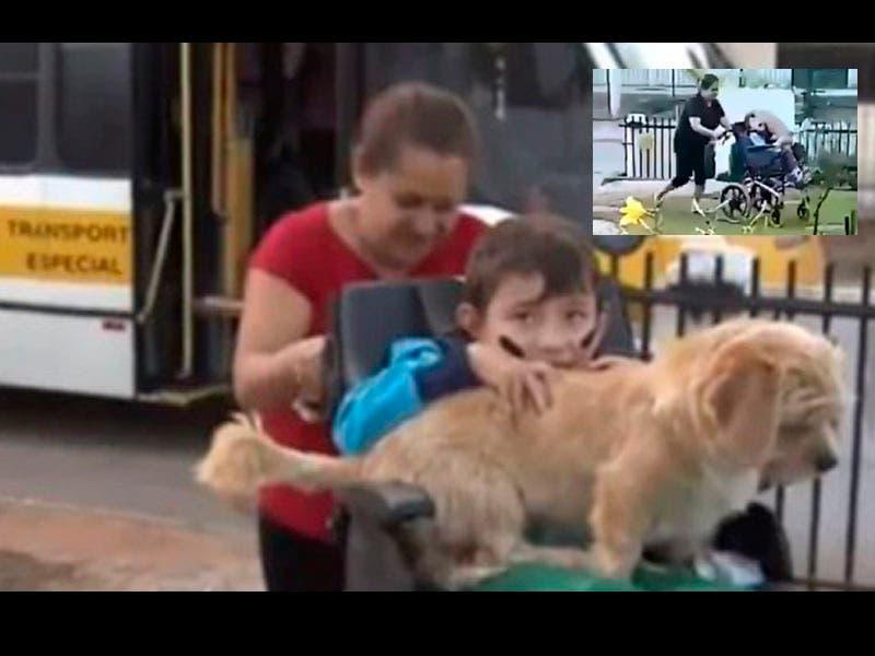 Vídeo: ¡Conmovedor! Perro recibe a su amo, le da abrazo a un niño en silla de ruedas
