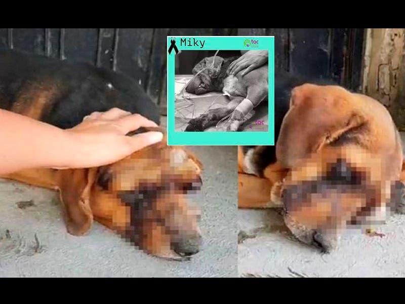 """Foto: Perro """"Miky"""" de Puebla muere luego de que le sacaron los ojos"""