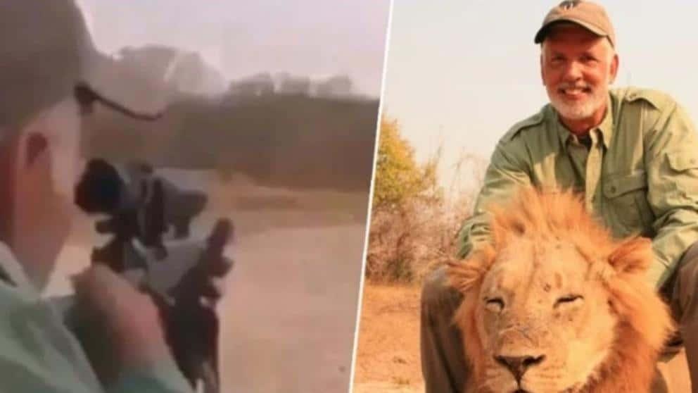 VÍDEO: Cazador mata a LEÓN dormido