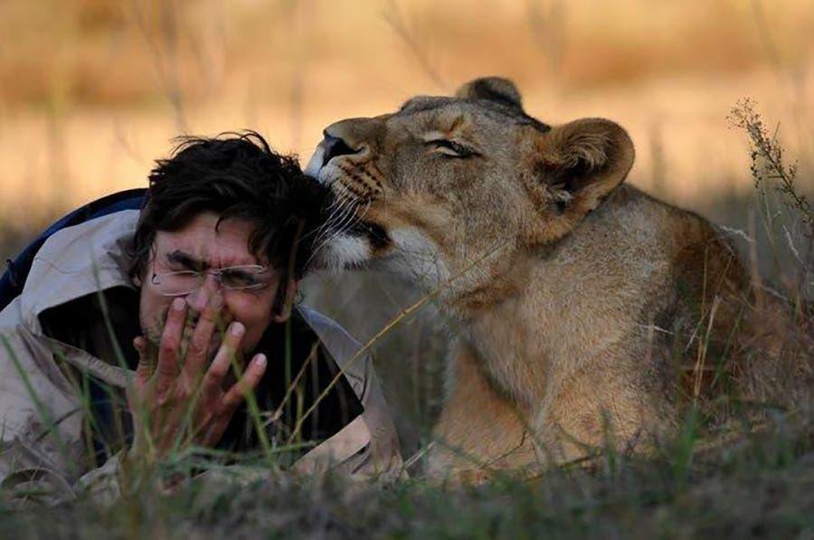 Hombre es devorado tras criar león en casa