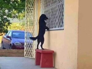 Ternurita el perro espera a su amo afuera del salón