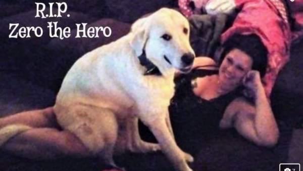 ¡Triste Historia! Perro Zero muere en un tiroteo por proteger a sus dueños