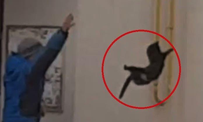 VÍDEO: mujer avienta gato para espantar un alce