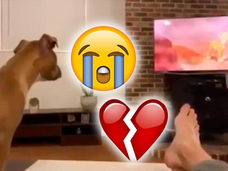 """Viral: Perrito llora al ver la película de """"El Rey León"""""""