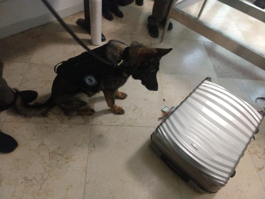 Inspecciones realizadas por personal adscrito a la Unidad Canina