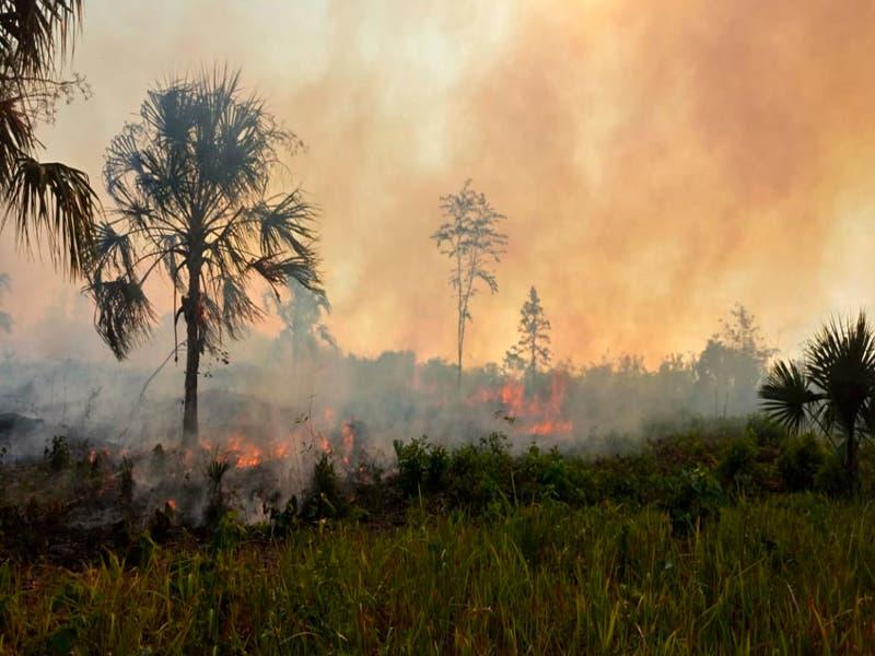 760 hectáreas afectas por incendios en Quintana Roo