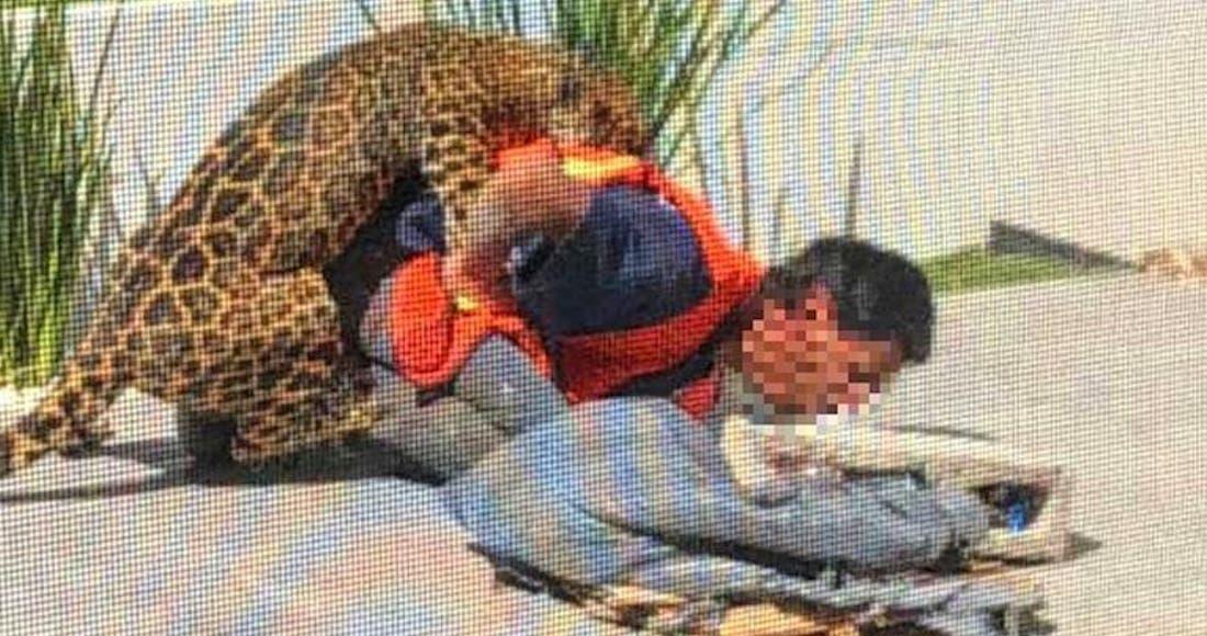 Ataca jaguar a albañil que instalaba reja en una casa, en Chihuahua