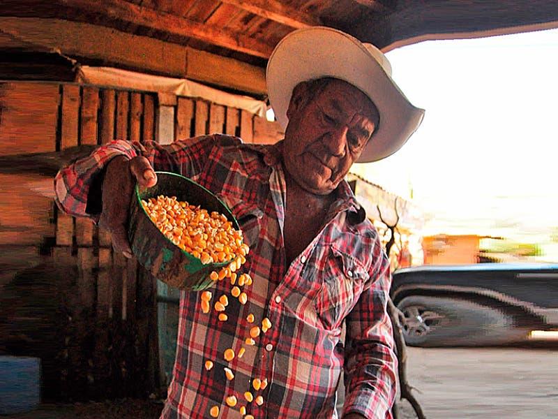 Desabasto de maíz en Quintana Roo