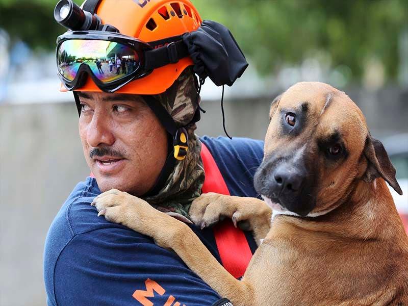 Bomberos de Cancún capacitan a unidades caninas