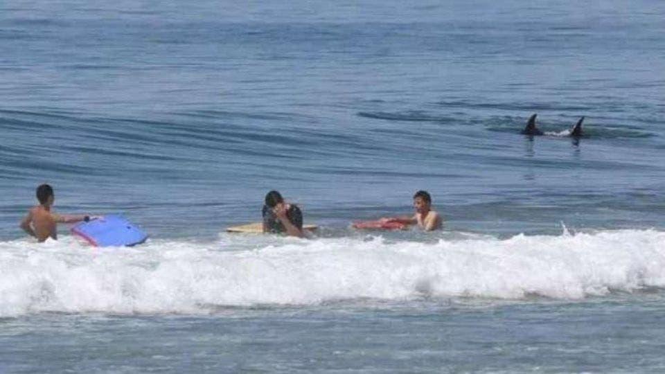 Playa es desalojada por presencia de tiburones y ballenas