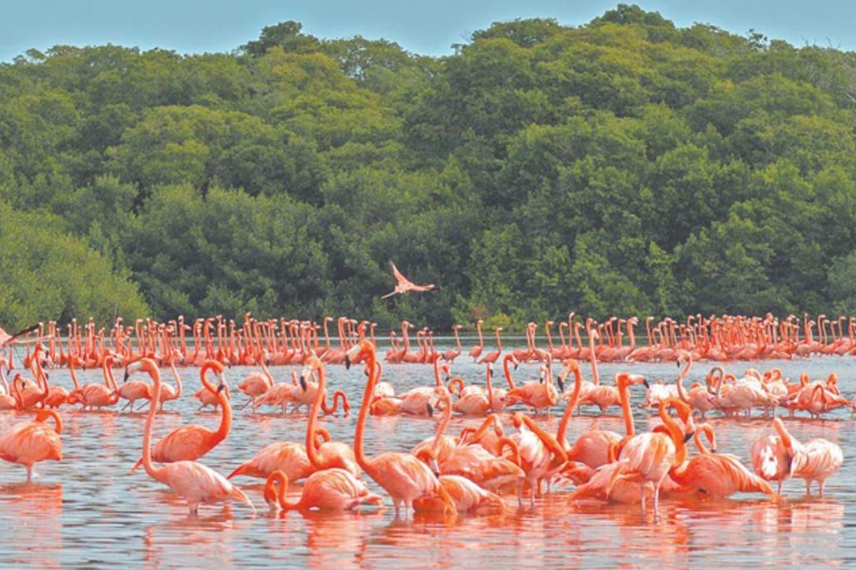 Celestún, Yucatán destaca por el hábitat de los bellos flamencos de color rosa intenso