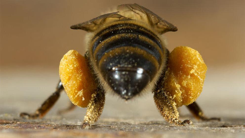 Una mujer tenía cuatro abejas en el ojo y tuvieron que extraerlas
