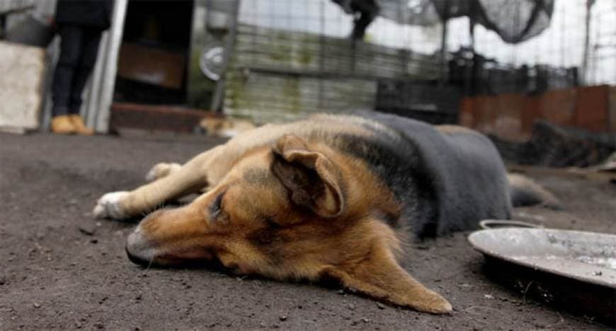 Ratero envenena perro, muere y roba taller mecánico