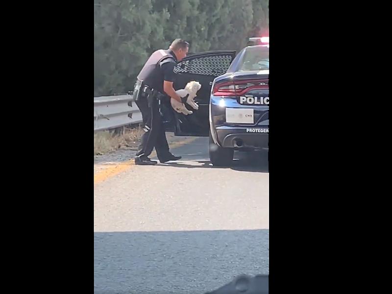 VIDEO: ¡Porque no todos los héroes usan capa!, Policía Federal rescata a un perrito callejero