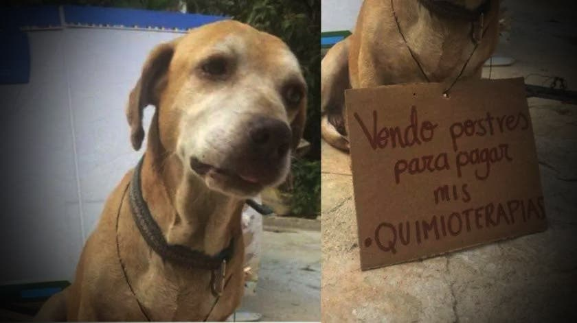 Perrito mexicano vende postres para sus quimioterapias