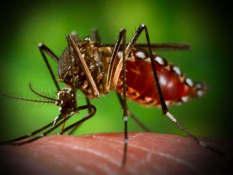 Inicia la temporada del Zika en México