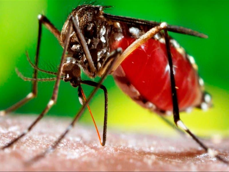 Se confirman diez casos de fiebre por dengue en Cozumel