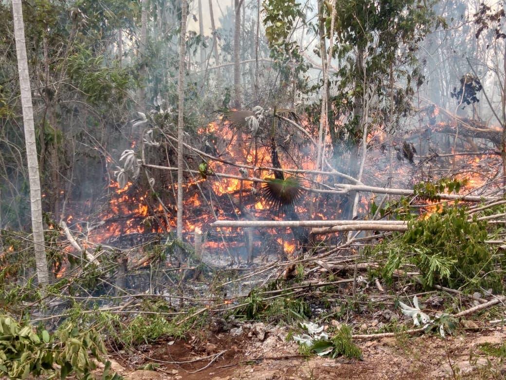 Activos en el país 66 incendios forestales; uno en Quintana Roo