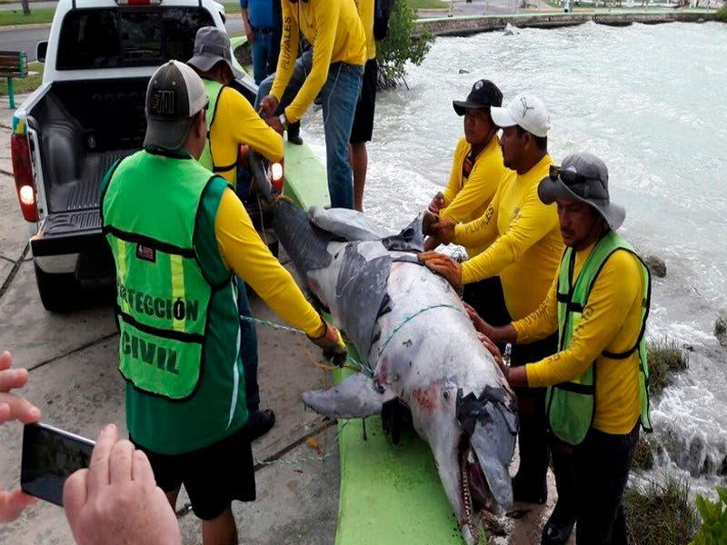 Incrementan muertes en especies protegidas del Santuario del Manatí