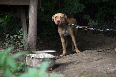 Es importante que se denuncia el maltrato animal