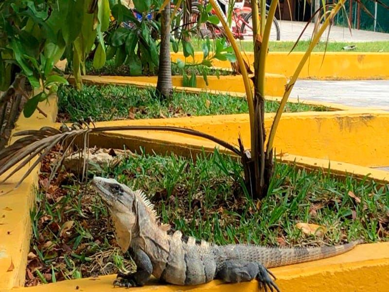 Playa del Carmen obtiene un muy buen lugar en el Reto Naturalista