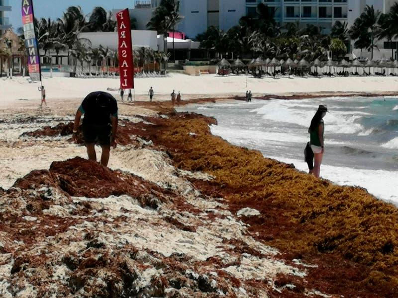 Playas de la Zona Hotelera de Cancún sufren recale masivo de sargazo