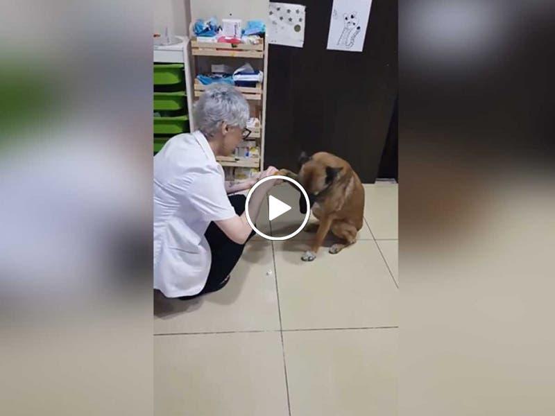 VÍDEO: Perro lastimado llega a farmacia para que lo curen